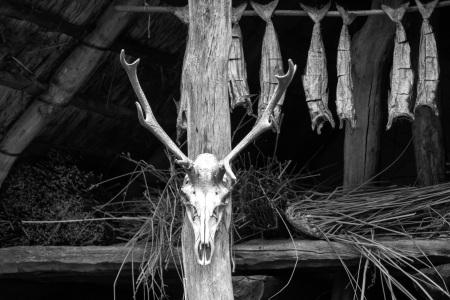skull-534738